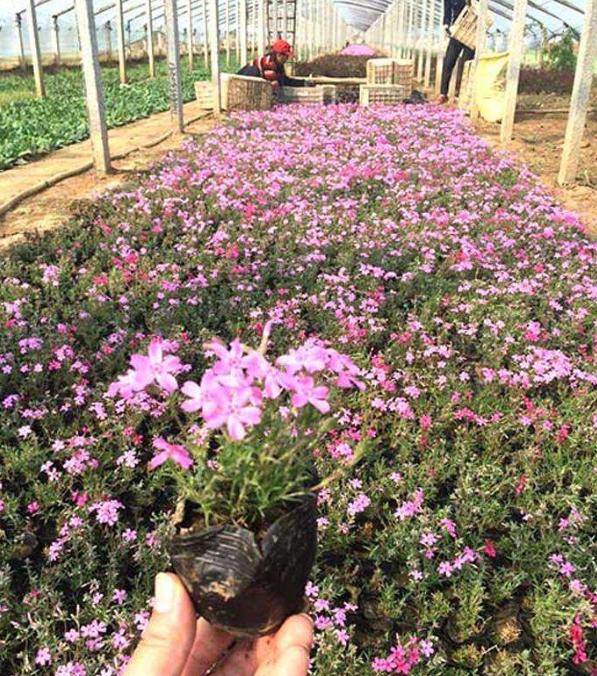 上海花卉苗木批发