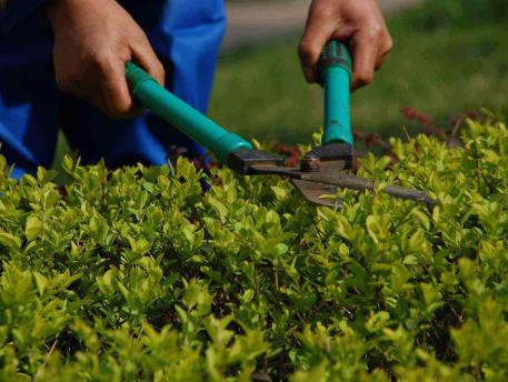 崇明绿化养护价格