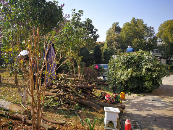 上海小区树木修剪