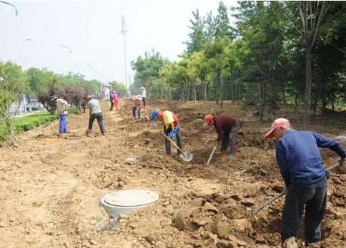 上海绿化施工价格