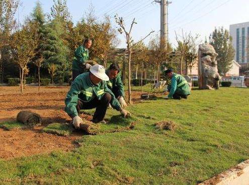 上海绿化施工哪家专业