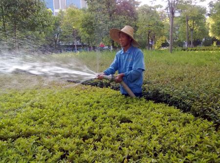 上海绿化养护