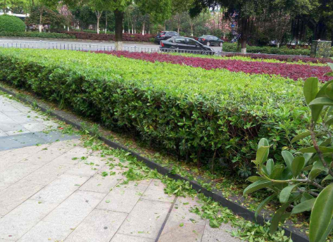 上海绿化施工电话